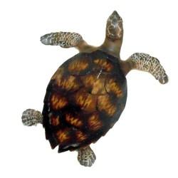 Sea Turtle Medium